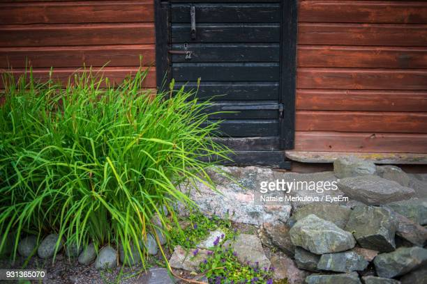 Close-Up Of Plants Growing By House