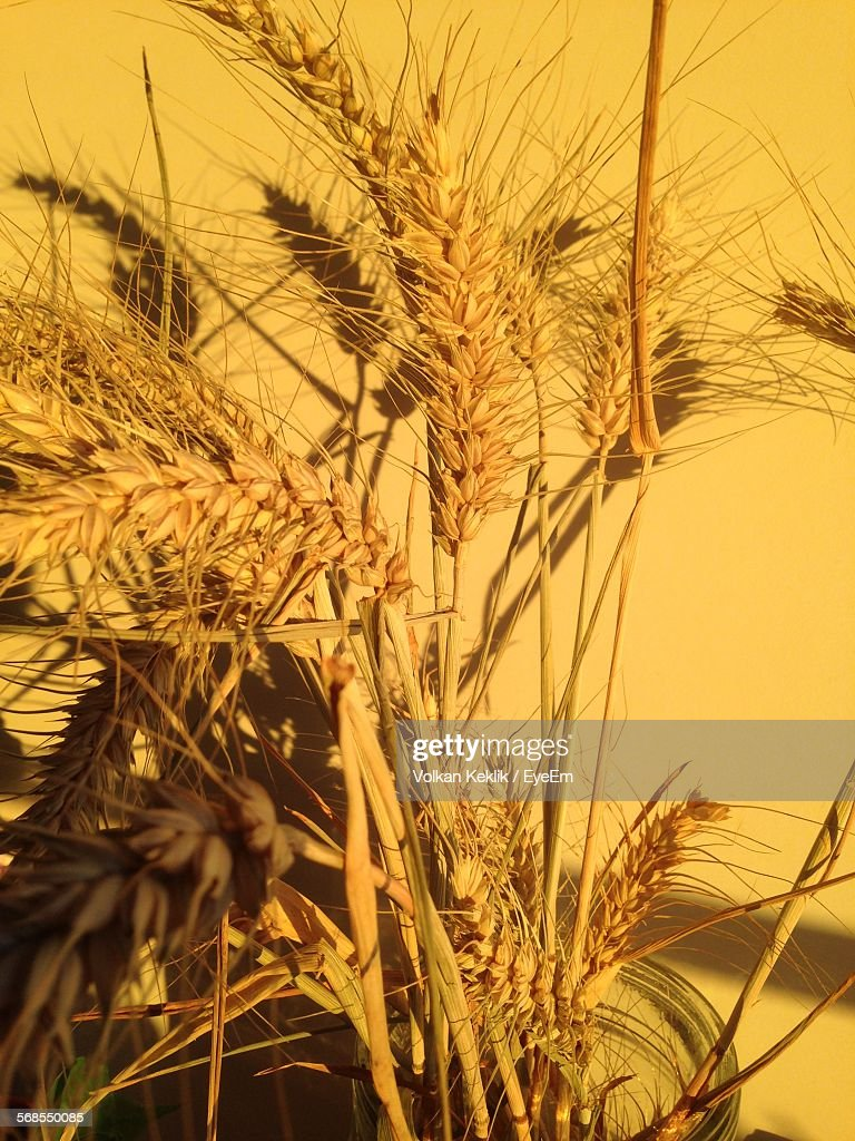 Close-Up Of Plants Growing In Field : Stock Photo