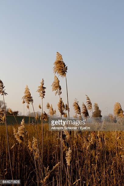 close-up of plants growing in field - albrecht schlotter stock photos and pictures