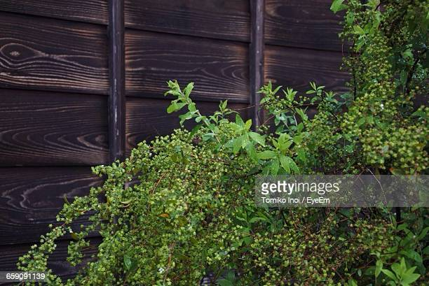 close-up of plants growing in front of dark wooden planks - tomiko inoi ストックフォトと画像