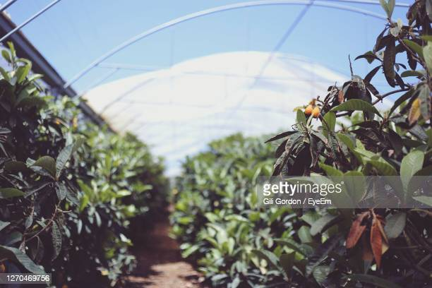 close-up of plants growing in greenhouse - netanya stock pictures, royalty-free photos & images