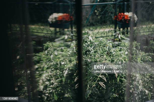 close-up of plants growing in greenhouse - magnoliophyta foto e immagini stock