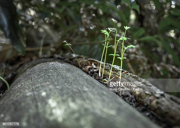 Close-Up Of Plants Growing On Fallen Tree In Forest
