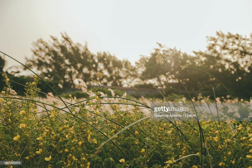 Close-Up Of Plants Growing On Field Against Sky : Stock Photo