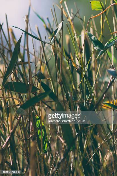 close-up of plants growing on field - albrecht schlotter stock photos and pictures