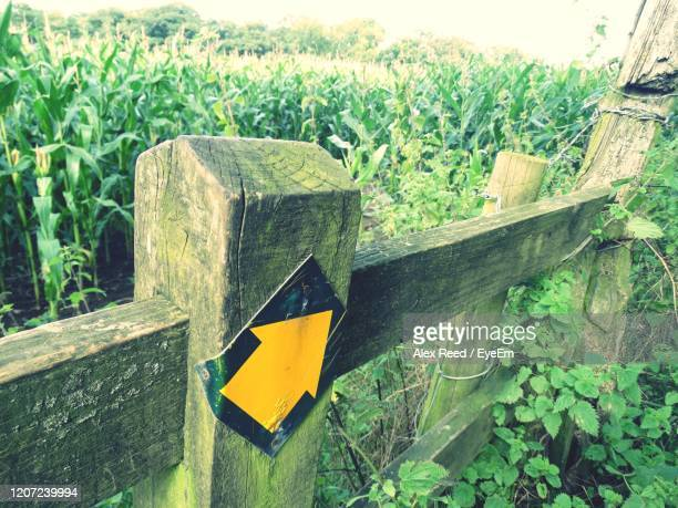 close-up of plants growing on field - road sign board stock pictures, royalty-free photos & images