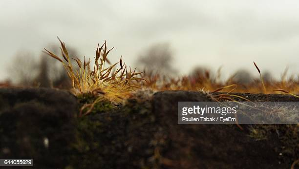 close-up of plants growing on field - paulien tabak stock pictures, royalty-free photos & images