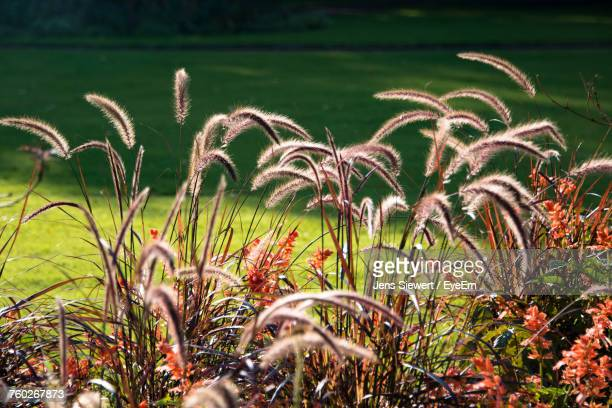 close-up of plants growing on field - jens siewert stock-fotos und bilder