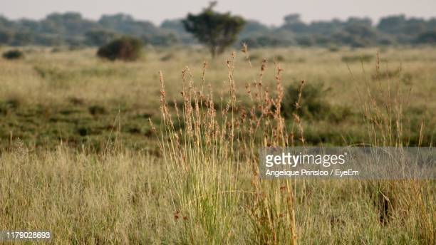 close-up of plants growing on land - prinsloo photos et images de collection