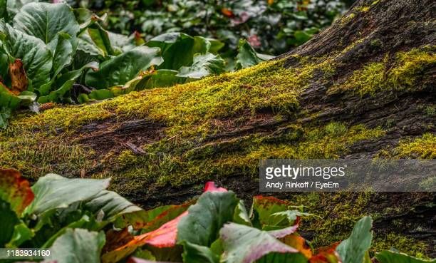 close-up of plants growing on rock - andy rinkoff stock pictures, royalty-free photos & images