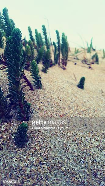 Close-Up Of Plants Growing On Sand
