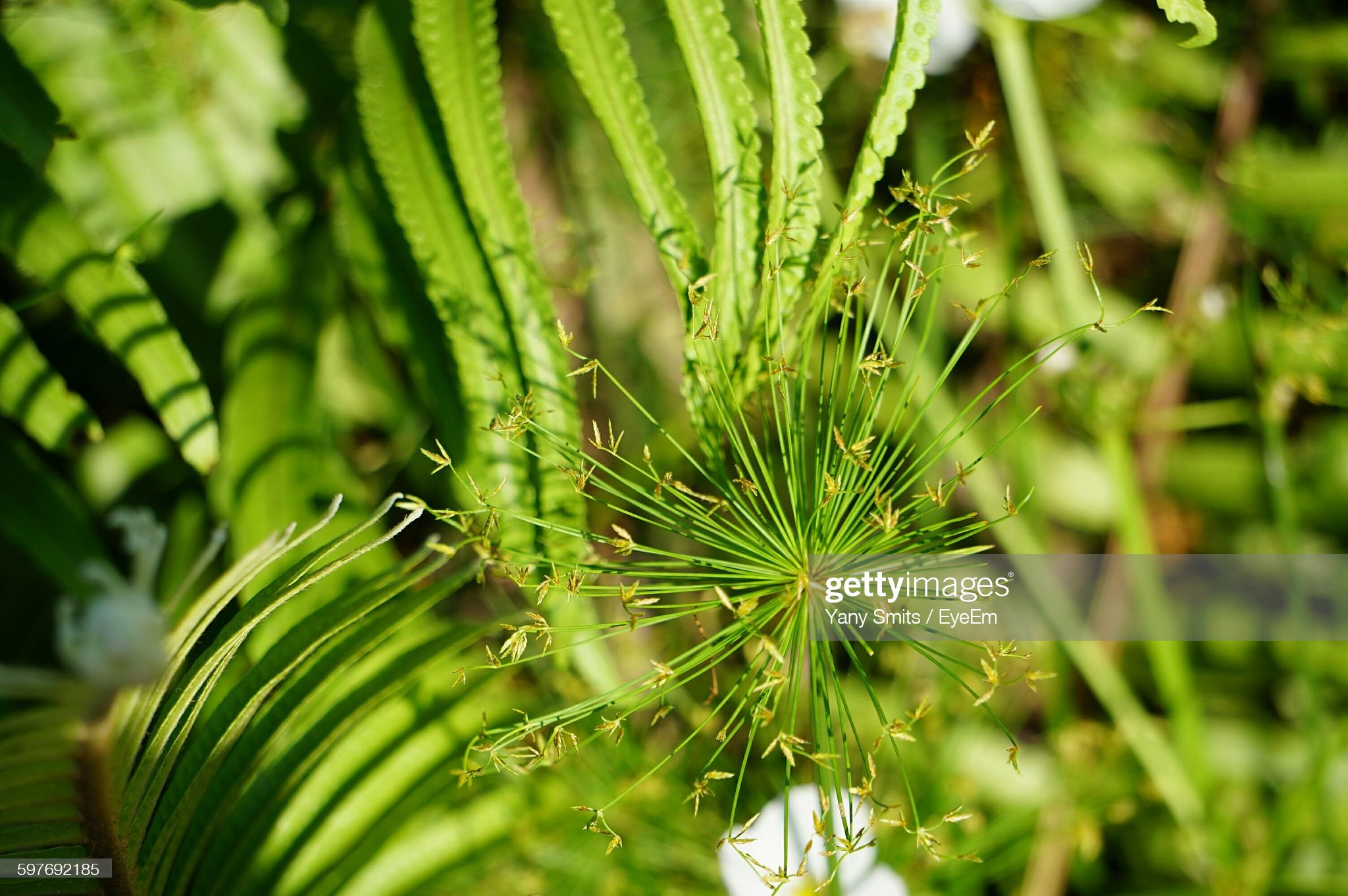 Close-Up Of Plants Growing Outdoors : Foto stock