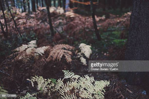 close-up of plants in forest during winter - bortes stock pictures, royalty-free photos & images