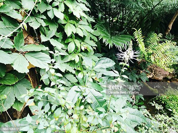 close-up of plants in forest - danielle reid stock pictures, royalty-free photos & images