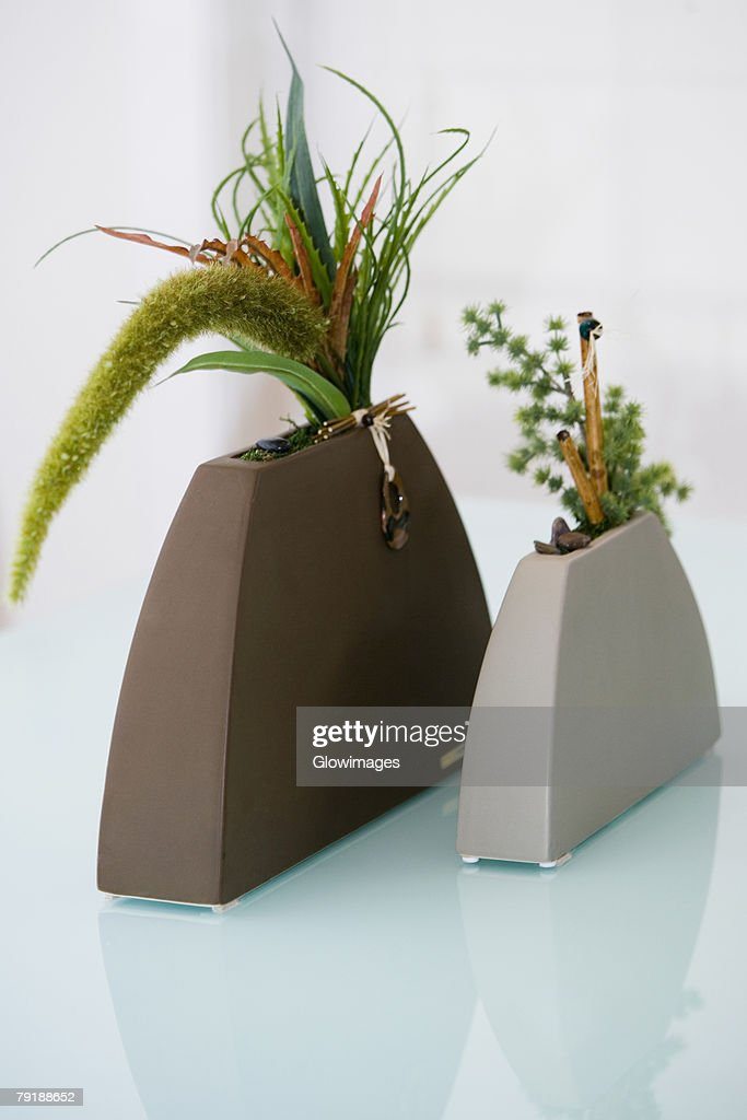 Close-up of plants in vases : Foto de stock