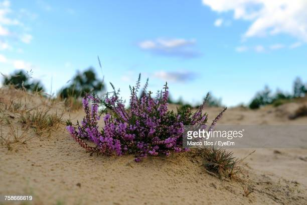 close-up of plants on beach against sky - bos stock pictures, royalty-free photos & images