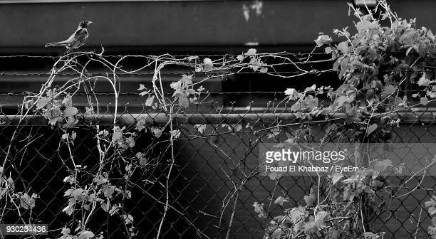 Close-Up Of Plants On Chainlink Fence