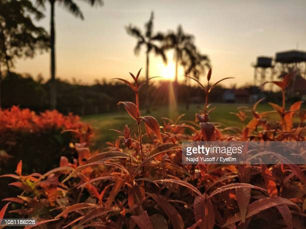 close-up of plants on field against sky during sunset - najid yusoff stock pictures, royalty-free photos & images