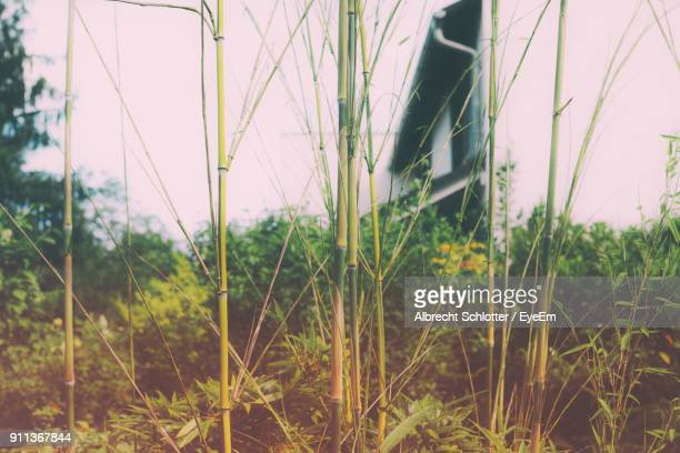 close-up of plants on field against sky - albrecht schlotter stock photos and pictures