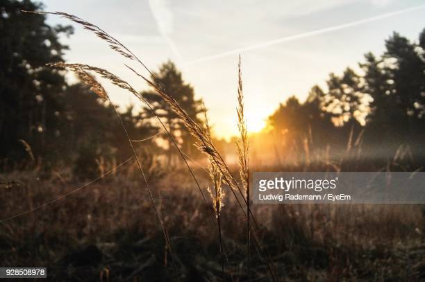 close-up of plants on field against sky - rademann stock pictures, royalty-free photos & images