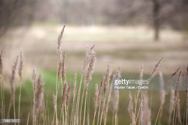 close-up of plants on field - paulien tabak stock pictures, royalty-free photos & images