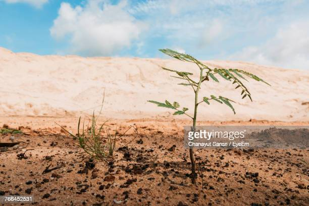 close-up of plants on sand against sky - chanayut stock photos and pictures