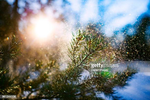 close-up of plants on snow covered field on sunny day - big bear lake stock photos and pictures