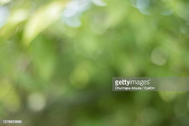 close-up of plants - soft focus stock pictures, royalty-free photos & images