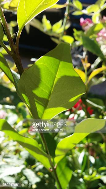 close-up of plants - massa stock pictures, royalty-free photos & images