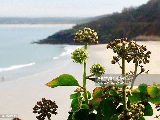 close-up of plants - st ives stock pictures, royalty-free photos & images