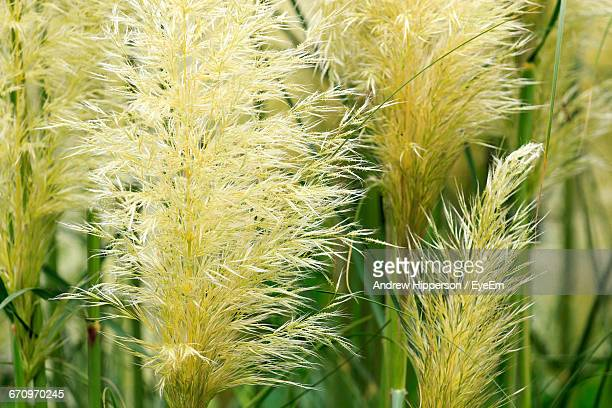 close-up of plants - letchworth garden city stock photos and pictures