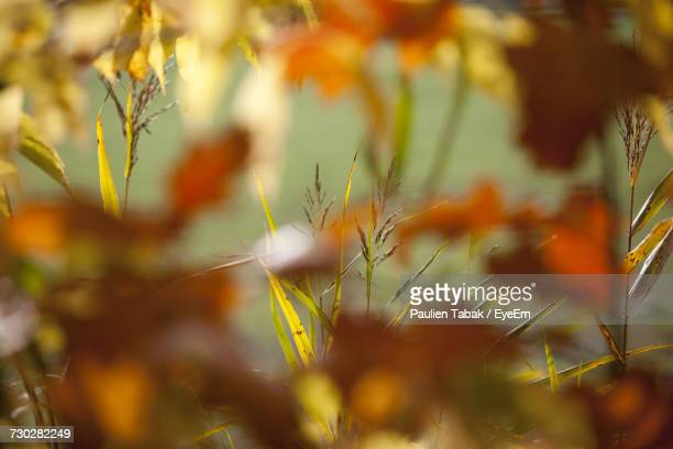 close-up of plants - paulien tabak stock pictures, royalty-free photos & images