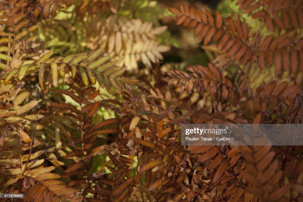 Close-Up Of Plants : Stockfoto