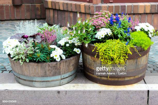 close-up of plants - pot plant stock pictures, royalty-free photos & images