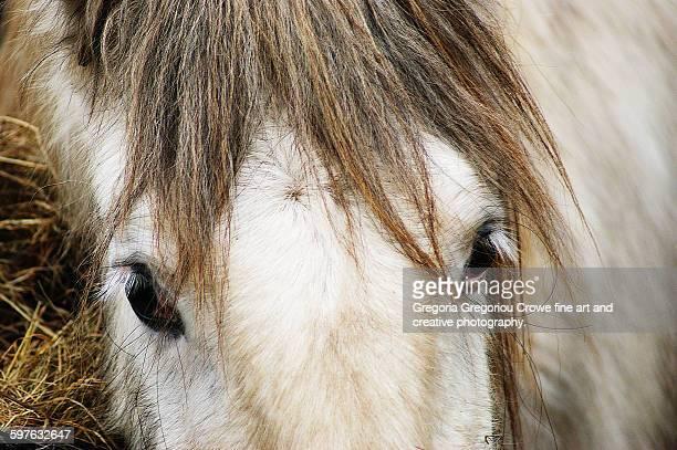 close-up of pony - gregoria gregoriou crowe fine art and creative photography - fotografias e filmes do acervo