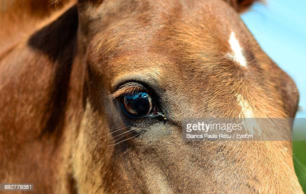 Close-Up Of Portrait Of Horse