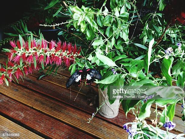 Close-Up Of Pot Plants On Wooden Table