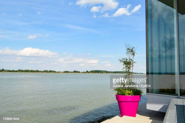 close-up of potted plant against sky - zuzana janekova stock pictures, royalty-free photos & images