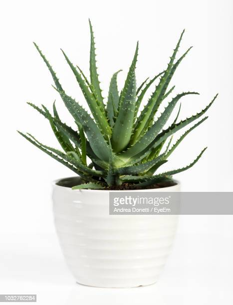 close-up of potted plant against white background - flora imagens e fotografias de stock