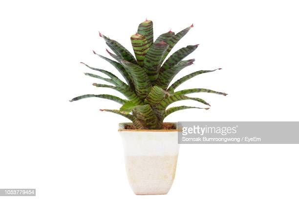 close-up of potted plant against white background - houseplant stock pictures, royalty-free photos & images