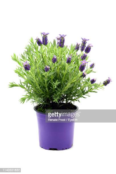 close-up of potted plant against white background - flower pot stock pictures, royalty-free photos & images