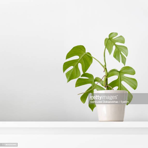 close-up of potted plant against white background - potted plant stock pictures, royalty-free photos & images