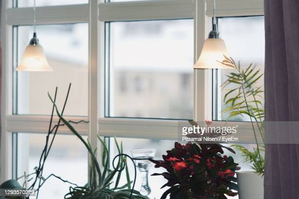close-up of potted plant against window at home - magnoliophyta foto e immagini stock