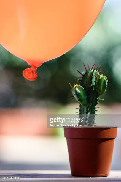 Close-Up Of Potted Plant By Balloon
