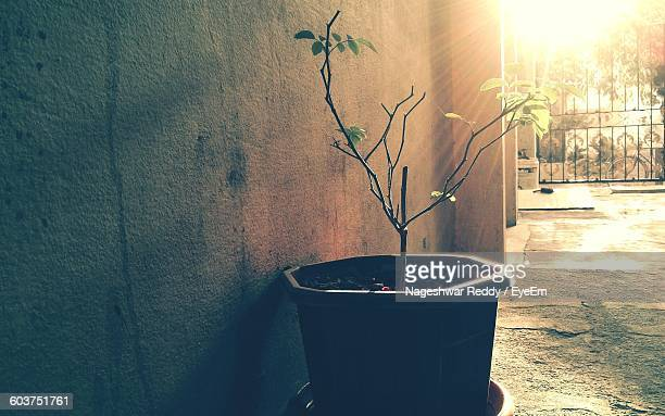 Close-Up Of Potted Plant By Wall On Sunny Day