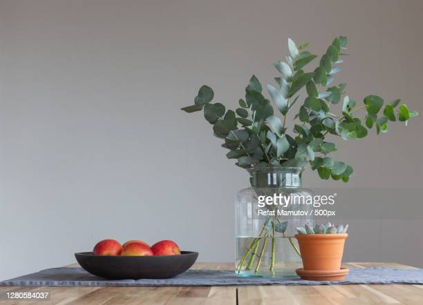 close-up of potted plant on table against wall - ユーカリの木 ストックフォトと画像