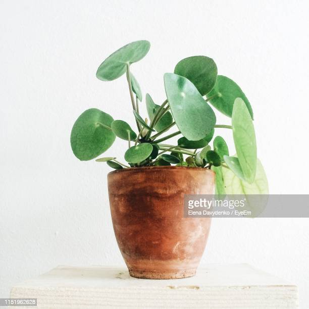 close-up of potted plant on table against white background - houseplant stock pictures, royalty-free photos & images