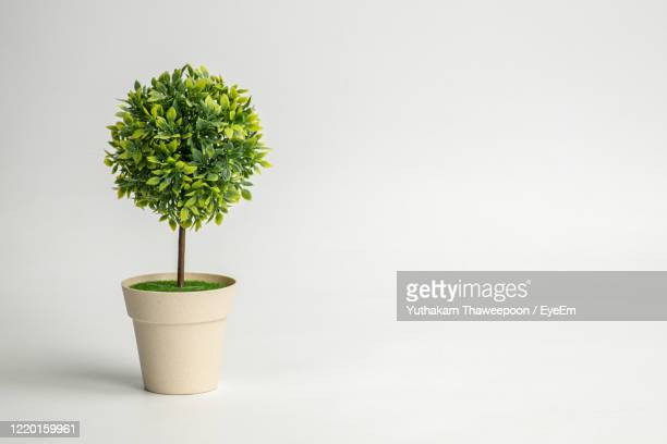 close-up of potted plant on table against white background - potted plant stock pictures, royalty-free photos & images