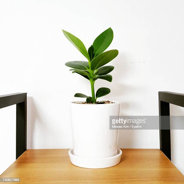 close-up of potted plant on table at home - pot plant stock pictures, royalty-free photos & images