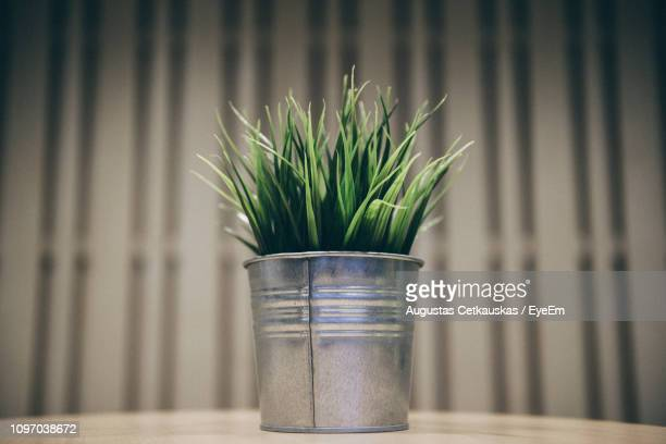 close-up of potted plant on table - cetkauskas stock pictures, royalty-free photos & images